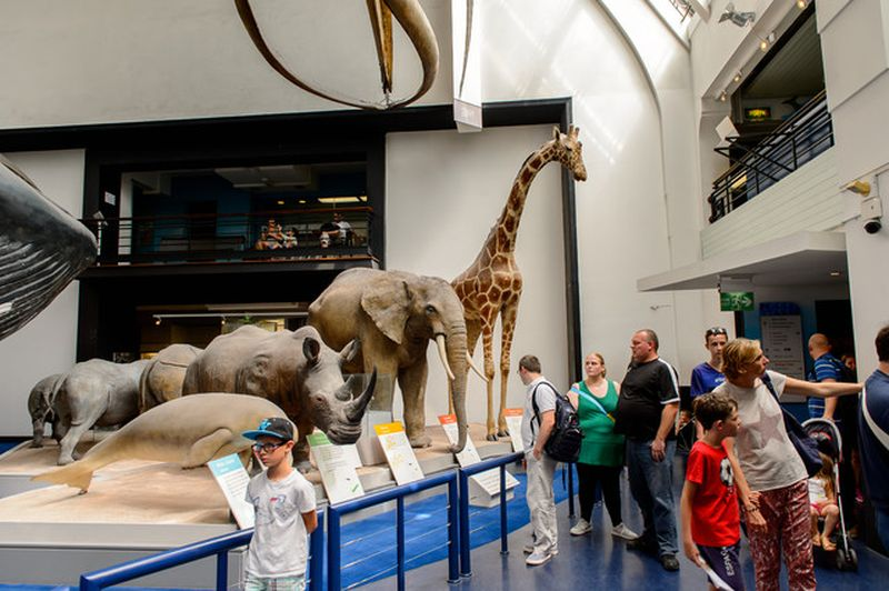 family tour at the natural history museum with universal tour guide