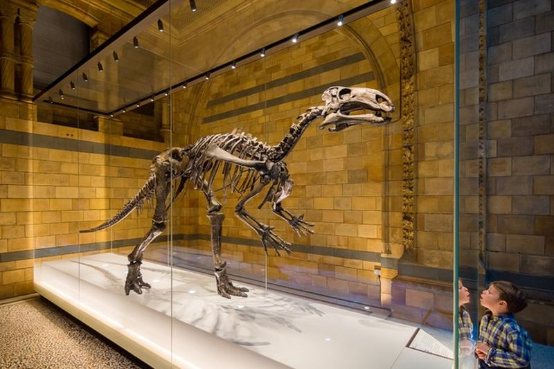 discover dinosaurs at the natural history museum in london