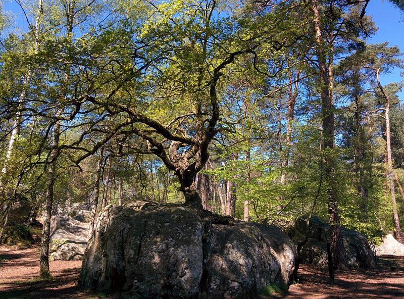 Fontainebleau Forest in daylight